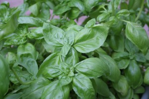 Finally – to round it out..some fresh basil from the backyard.