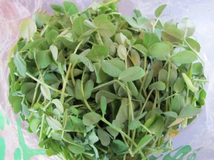 Pea Shoots from @BossyAcres