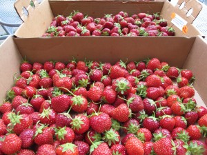 Strawberries - Pine Tree Orchard