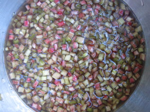 Rhubarb Maceration