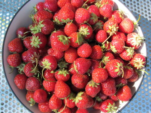 Minnesota Strawberries