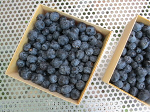 blueberries - Bayfield Fruit Company